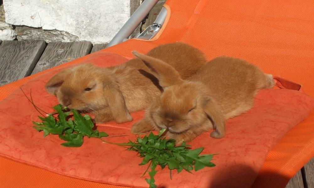 ארנבים