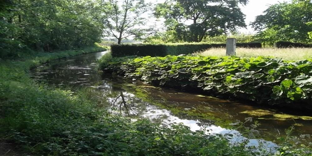 נהר ירוק 5