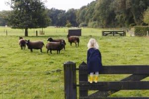 תכנון לנופש בהולנד עם ילדים