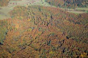 היער השחור גרמניה
