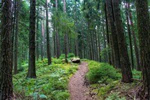 דוגמא לתמונה של היער השחור בגרמניה